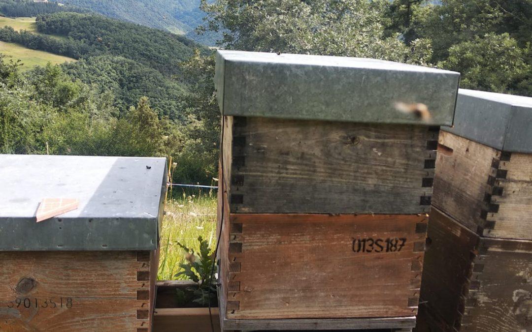 EN VÍDEO: así se instala la báscula para colmenas de HiveWatch que probamos en Colmenares de Vendejo