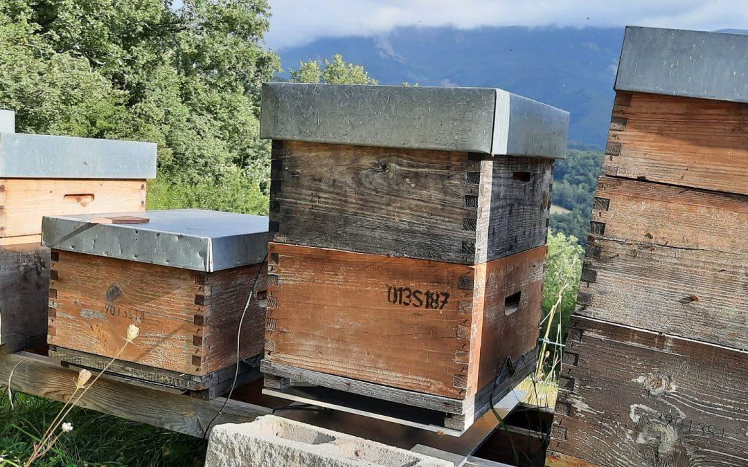 Monitorización de colmenas: la importancia de controlar la humedad y el calor de la colonia
