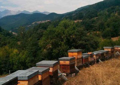 Miel de bosque Colmenares de Vendejo - Cantabria